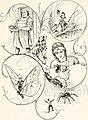 The heart of oak books (1906) (14569333117).jpg