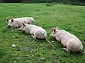 Three little pigs (geograph 4633727).jpg