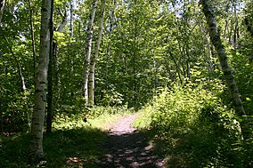 Tolland State Forest.jpg