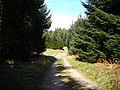 Track in Dalbeattie Forest - geograph.org.uk - 392895.jpg