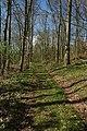 Track through woodland, Washbourne Hill - geograph.org.uk - 779593.jpg