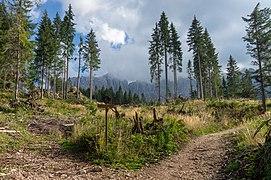 Trail from Nova Levante to Lake Carezza, South Tyrol.jpg
