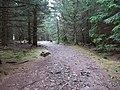 Trail to Hahnenkleeklippen.jpg