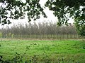 Tree plantation off Fittleworth Road - geograph.org.uk - 258134.jpg