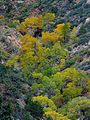 Trees fall autumn.jpg