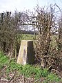 Trig point in hedge, Boughton Malherbe - geograph.org.uk - 1202864.jpg