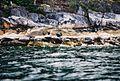 Trips 05 - Sechelt Inlet - 10 - Seals (90968041).jpg