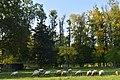 Troupeaux de moutons broutant l'herbe (23542204085).jpg