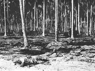 Battle of the Tenaru - Japanese soldiers, killed while assaulting U.S. Marine Corps positions, lie dead in a coconut grove on Guadalcanal after the Battle of the Tenaru on 21 August 1942. Two U.S. Marine Corps M3 Stuart tanks of A Company, 1st Tank Battalion, participating in the battle in late afternoon are visible in the background.