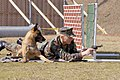 US Navy 030212-N-8937A-004 Master-at-Arms 2nd Class Donald Reinhart, assigned to Fleet Activities Sasebo Security Department, fires off blank rounds of ammunition during a training exercise with his military working dog, Goof,.jpg
