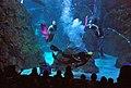 US Navy 110502-N-CI293-071 Mermaids swim with Navy Diver 1st Class Bryce Weber at the Denver Aquarium during Denver Navy Week.jpg
