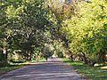 Unnamed Road, Moldova - panoramio (316).jpg