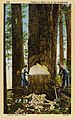 Unspecified Northwest - Cutting a Giant Fir in the Northwest (NBY 430201).jpg