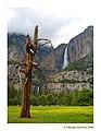 Upper And Lower Yosemite Falls.jpg