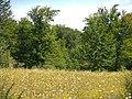 Urbasa-Andia Nature Park in Navarre 02.jpg