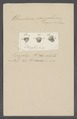 Urceolaria scyphina - - Print - Iconographia Zoologica - Special Collections University of Amsterdam - UBAINV0274 113 21 0009.tif