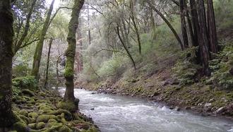Uvas Creek - Uvas Creek near Sveadal, California, January 2017