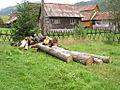Valea Gugi.JPG