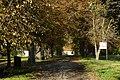 Veltrusy, zámecký park na podzim, cesta k zámku.jpg