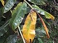 Verde y amarillo brillantes (6045558915).jpg