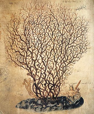 Thalassa (mythology) - Illustration of coral with the goddess at the base, from a 6th-century medical discourse