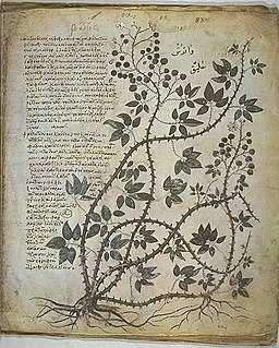 <i>Materia medica</i> Latin medical term for the body of collected knowledge about the therapeutic properties of any substance used for healing