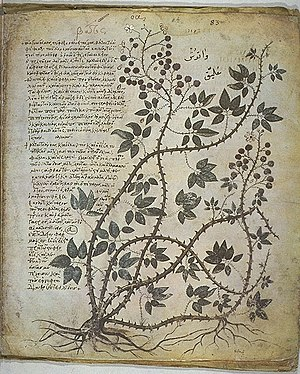 Materia medica - Page from the 6th century Vienna Dioscurides, an illuminated version of the 1st century De Materia Medica