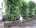 Visite du Branchage Juilet 2010 Saint Hélyi c.jpg