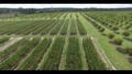 Viveros-y-plantaciones-de-pecan.png