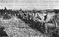 Vojaške vaje jugoslovanske kraljeve vojske pri Ptuju (8).jpg
