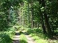 WILCZE ŁUGI lato 03 - panoramio.jpg