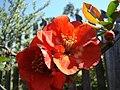 WILCZE ŁUGI wiosna kwiaty i .... 08 - panoramio.jpg