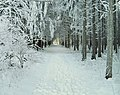 Wald Balingen.jpg