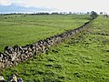 Wall near Little Bavington - geograph.org.uk - 271482.jpg