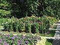 Warsaw Uniwersity Botanical Garden dalie.jpg