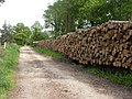 Waterditch, timber - geograph.org.uk - 1316687.jpg