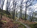 West Highland Way and oak woods - geograph.org.uk - 5697.jpg