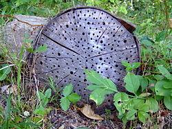 Arboretum Park Harle Wikipedia