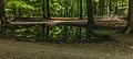 Wilde zwijnen (Sus scrofa) zoel. Locatie, Kroondomein Het Loo 03.jpg