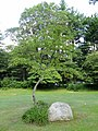 Williams Tavern marker - Dover, MA - DSC09510.JPG