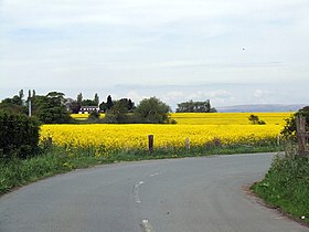 Winwick - Oilseed Rape Field.jpg