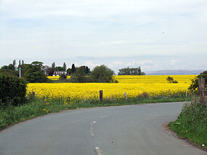 Winwick, Cheshire - An Oilseed Rape field in Winwick