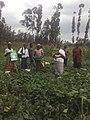 Women harvesting.jpg