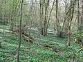 Wood Anemone carpet in Hendall Wood - geograph.org.uk - 1814265.jpg