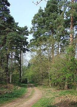 Woodland, near Quatford, Shropshire - geograph.org.uk - 409173