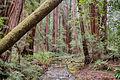 Woodland Stream (18252540455).jpg