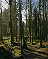 Woodland by the Silverburn - geograph.org.uk - 110382.jpg