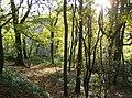 Woodland in McIlroy Park - geograph.org.uk - 611978.jpg