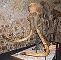 Woolly mammoth mount (1).jpg