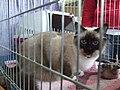 Wystawa kotów 209.JPG